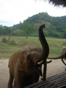 trumpeting elephants